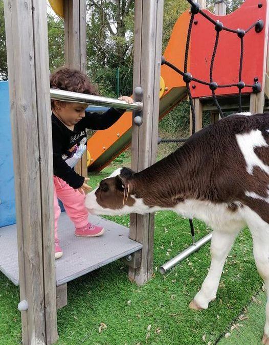Initiative d'une adhérente dans le Var : création d'un parc animalier